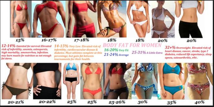 Image result for body fat percentages